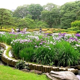 Ирис в саду: оформление сада ирисами, Любимые цветы
