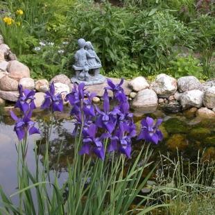 Ирисы в саду у пруда