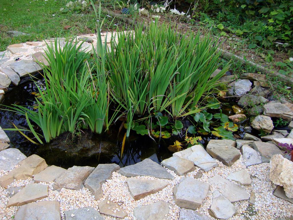 Высаживать растения запускать рыб