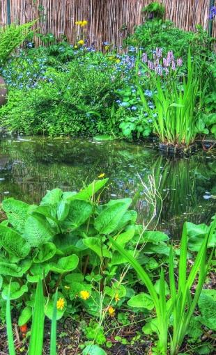 Садовый пруд