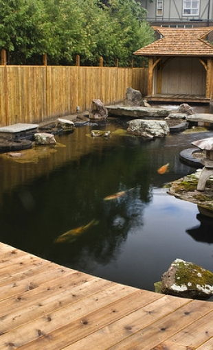 Садовый пруд в японском стиле