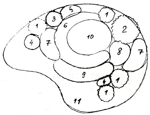 Схема клумбы с ирисами